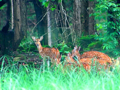 7 Days Bardia Package: Tiger Trailing (Budget)